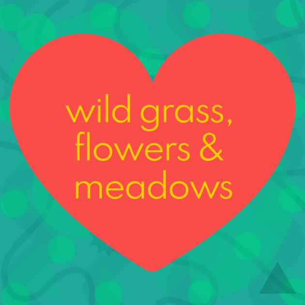 wild grass, flowers & meadows