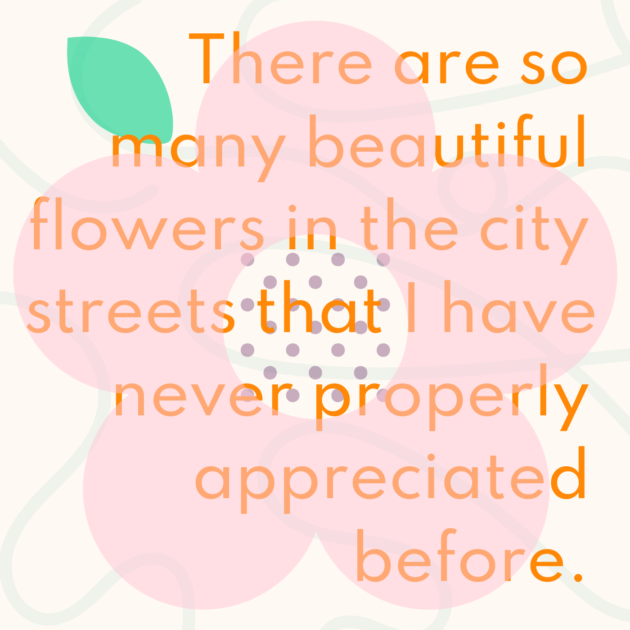 There are so many beautiful flowers in the city streets that I have never properly appreciated before.