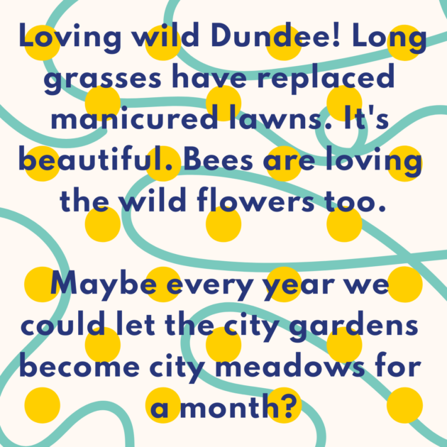 Loving wild Dundee! Long grasses have replaced manicured lawns. It's beautiful. Bees are loving the wild flowers too. Maybe every year we could let the city gardens become city meadows for a month?