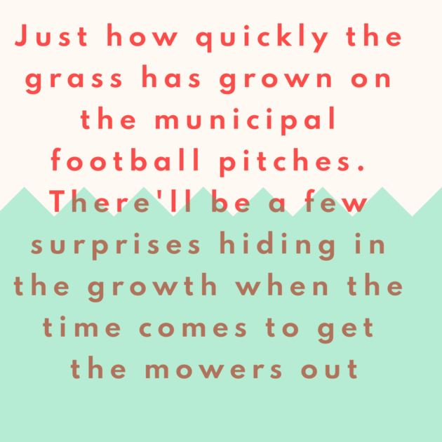Just how quickly the grass has grown on the municipal football pitches. There'll be a few surprises hiding in the growth when the time comes to get the mowers out