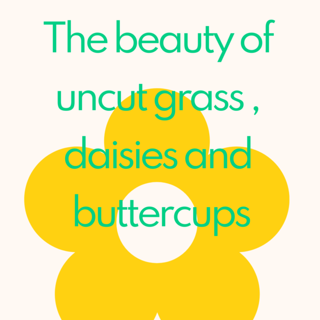 The beauty of uncut grass , daisies and buttercups