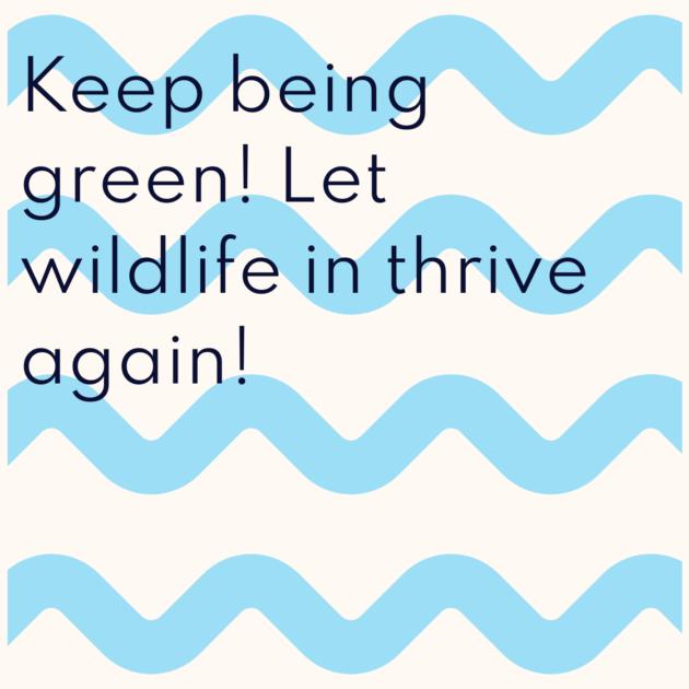 Keep being green! Let wildlife in thrive again!