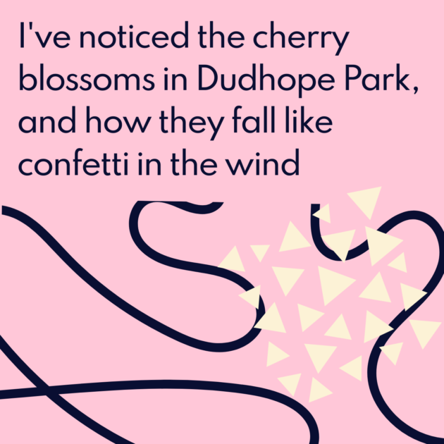 I've noticed the cherry blossoms in Dudhope Park, and how they fall like confetti in the wind
